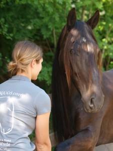 Alina v. Wrede Pferdeosteopathie