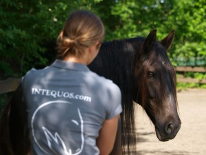 Intequos Pferdeosteopathie